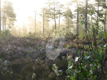 spinnennetz-in-heide